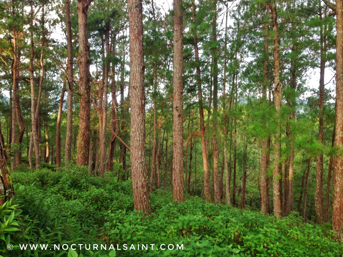 Travel Guide : How to get to Sagada?